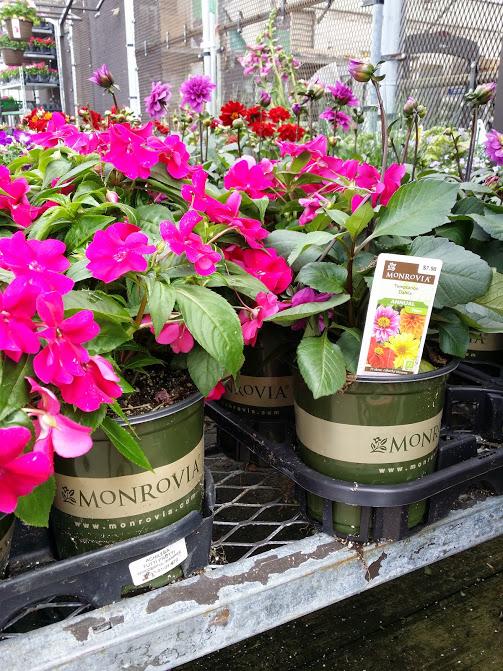 monroviaflowers