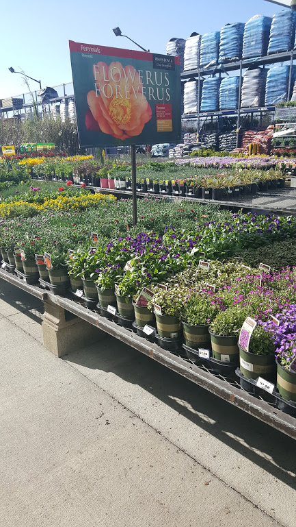 lowes display